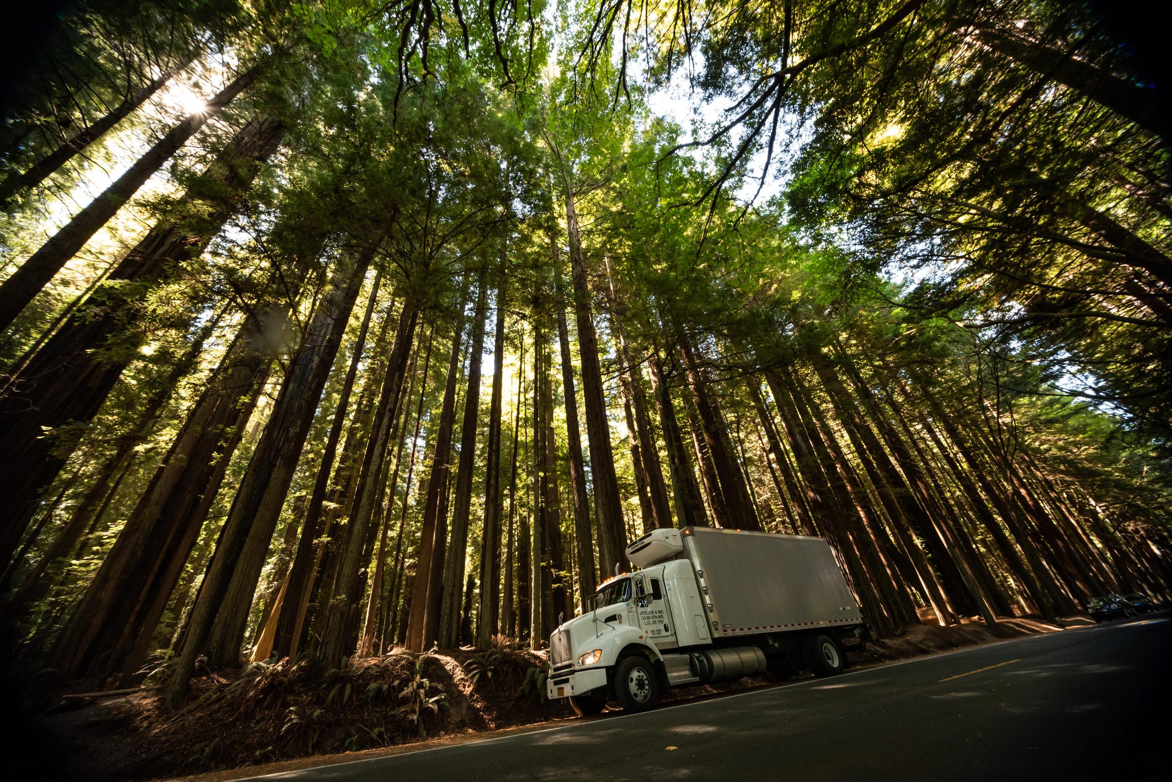 Redwoods_CourtesyBruceDailey